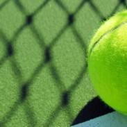 HEX Tennis Dog Bed